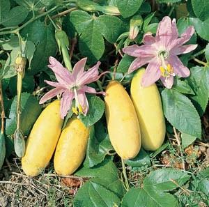 Bananen-Passionsfrucht...